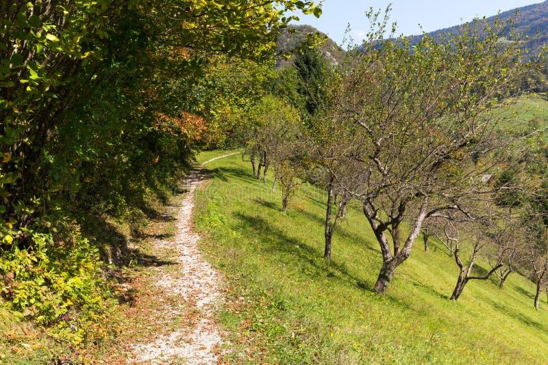 След майны фермы леса листьев осени листвы красочный стоковые фото
