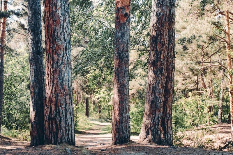 След между деревьями стоковые фото