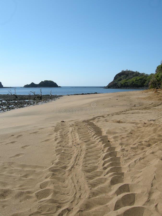 След на песке зеленых морских черепах на женщине пляжа кладя яйцо, сторону черепахи стоковое фото rf