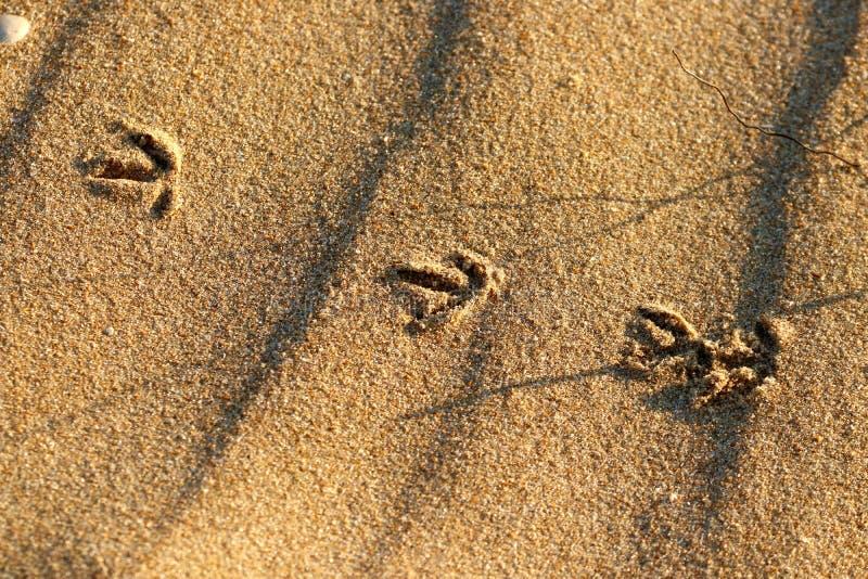 След ноги Wader на пляже стоковая фотография