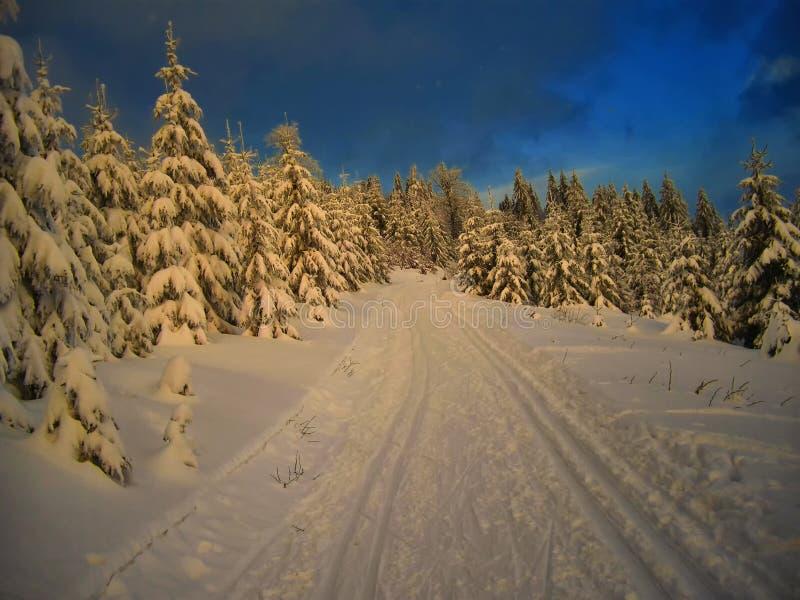 След по пересеченной местностей в елевом лесе деревьев на вечере зимы стоковые фото