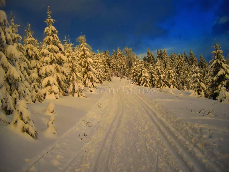След по пересеченной местностей в елевом лесе деревьев на вечере зимы стоковые изображения