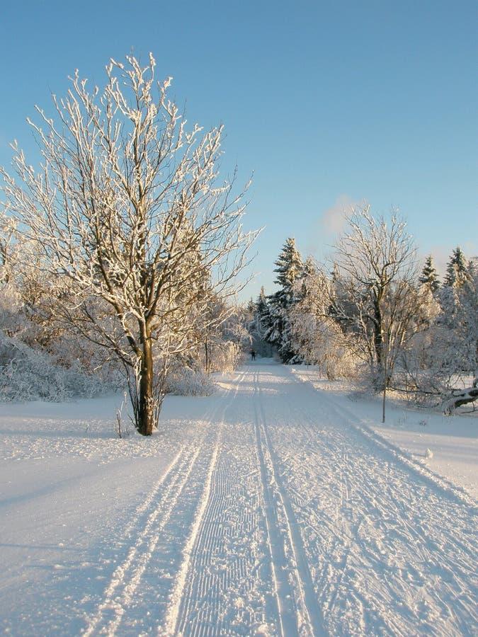 след снежка стоковые изображения