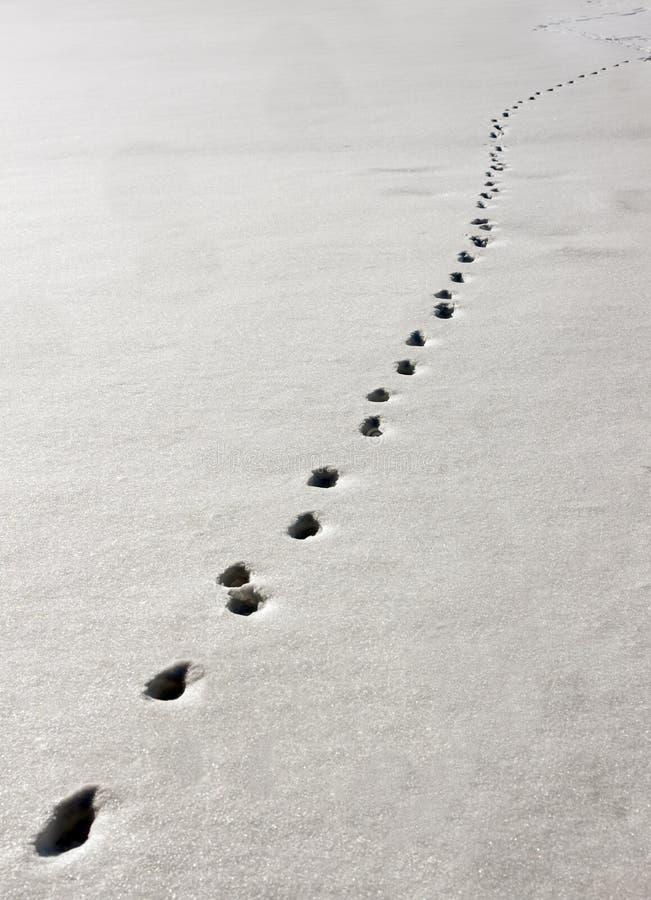 след снежка стоковое фото rf