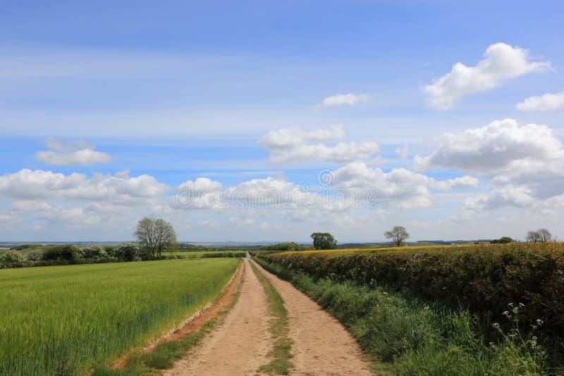 След фермы грязи через поля живых изгородей ячменя и боярышника в весеннем времени стоковое фото