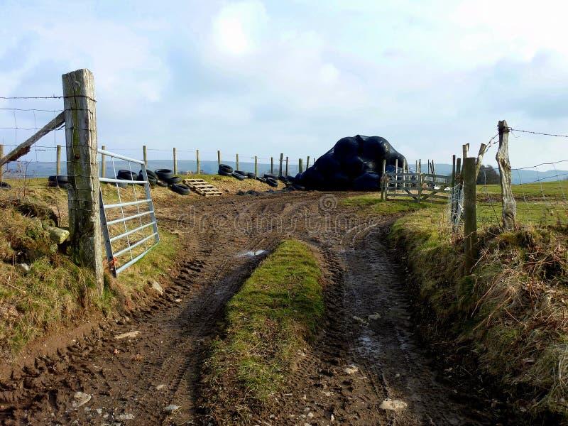 След фермы с черно-обернутыми silage или сенажом стоковая фотография rf