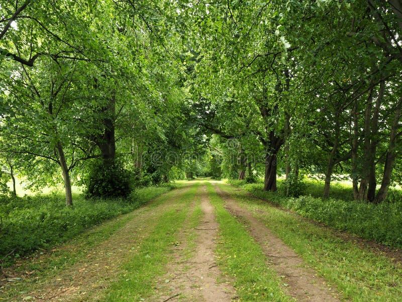 След через деревья с свежими листьями весны стоковые фотографии rf