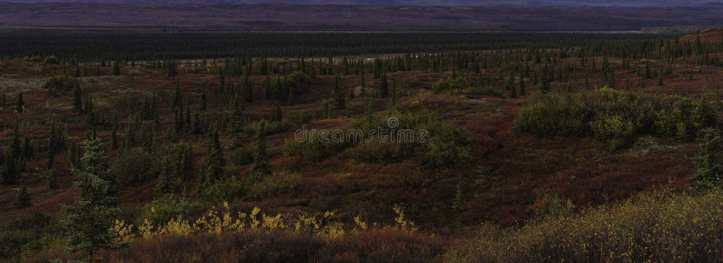 След через ландшафт тундры, сезон осени Аляски стоковое изображение
