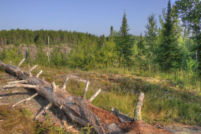 След Gunflint в главном национальном лесе, Минесоте стоковое фото rf