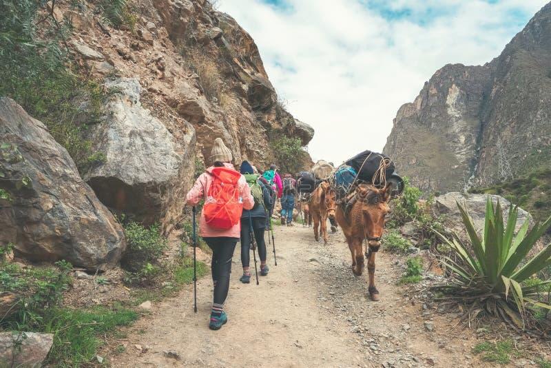 След Inca, Перу: 11-ое августа 2018: Группа в составе hikers идет на известный след Inca с идя ручками Им к стоковые изображения