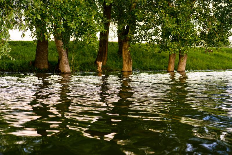 Слепимость на воде стоковое изображение