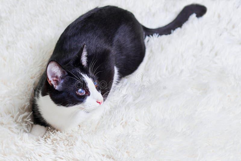 Слепой кот больной, раненый, шторка, спасенная от улиц города Любимчики дня мира, концепции для животного укрытия стоковые фотографии rf