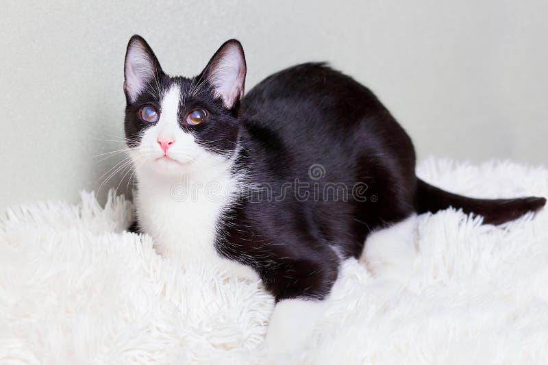 Слепой кот больной, раненый, шторка, спасенная от улиц города Любимчики дня мира, концепции для животного укрытия стоковое изображение