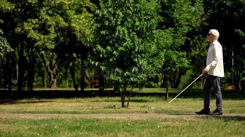 Слепой пенсионер может безопасно передвигаться по белому тростнику, независимо ходя в парке стоковые фотографии rf