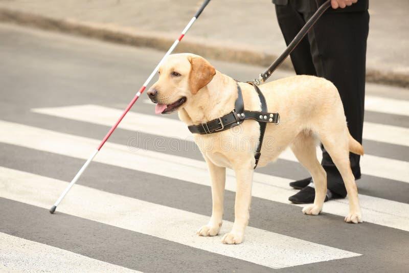 Слепой порции собака-поводыря стоковое изображение