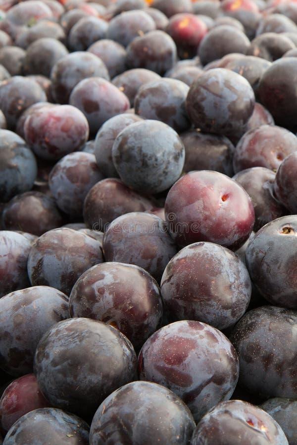 сливы пурпуровые стоковые изображения rf