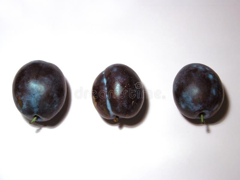 сливы 3 стоковая фотография