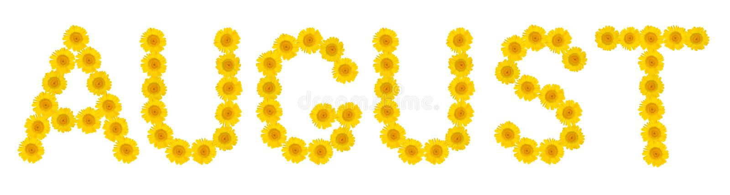 Слово АВГУСТ Письма сделаны ярких желтых хризантем цветков r r стоковые изображения