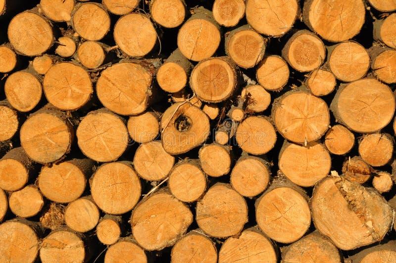 сложенные стволы дерева вверх стоковые фотографии rf