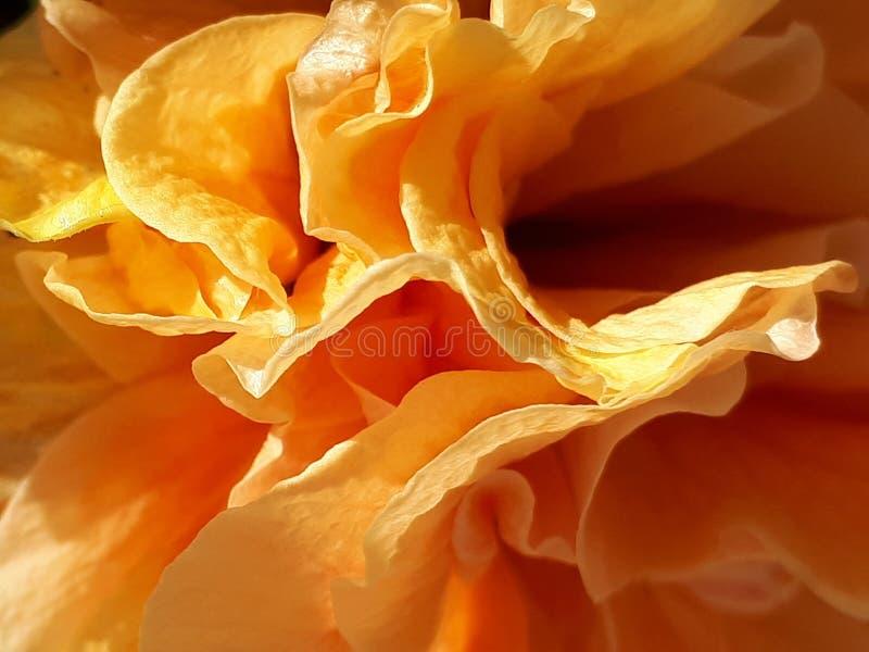 Слои апельсина стоковые изображения rf