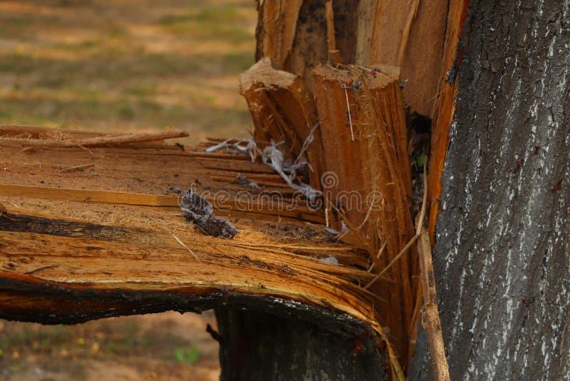 Сломленное дерево стоковая фотография