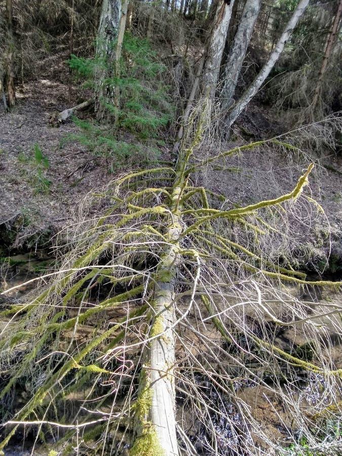 Сломленное дерево стоковые фотографии rf