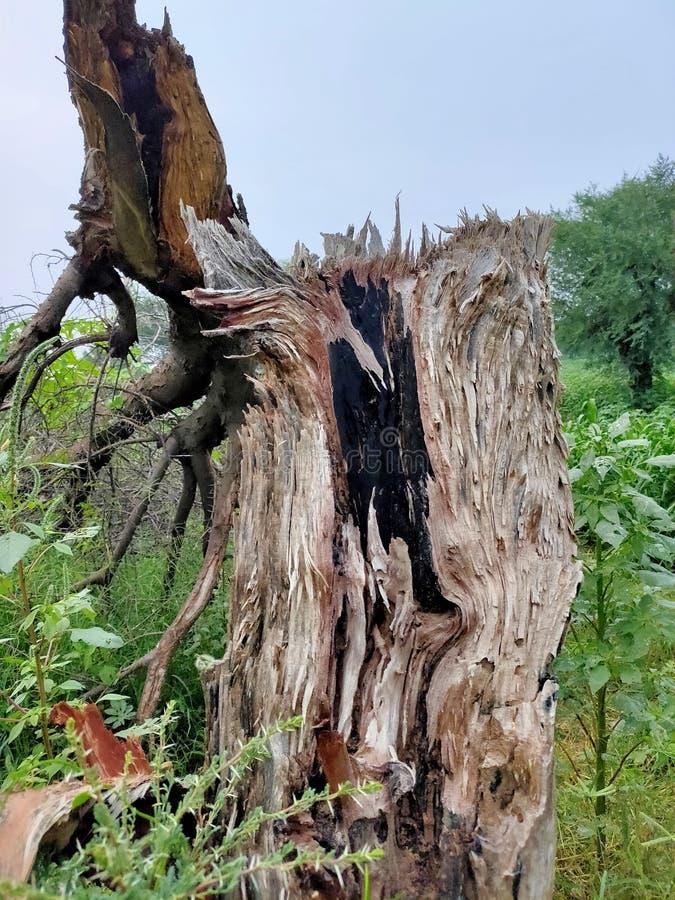 Сломленное дерево Strom стоковые фотографии rf