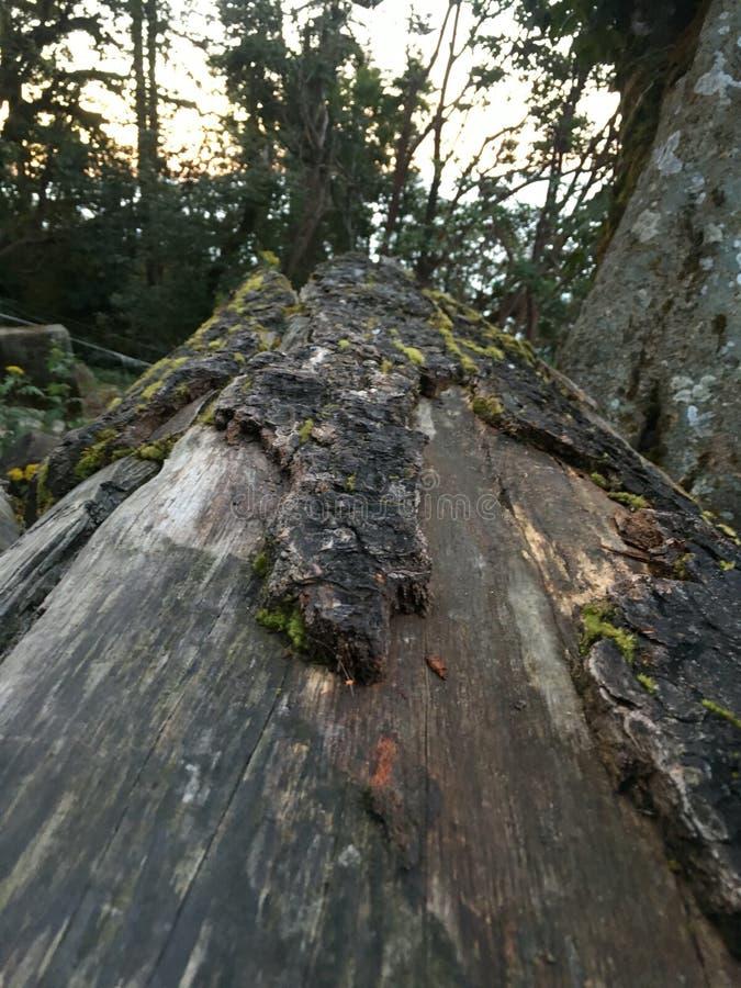 Сломленные древесины стоковая фотография