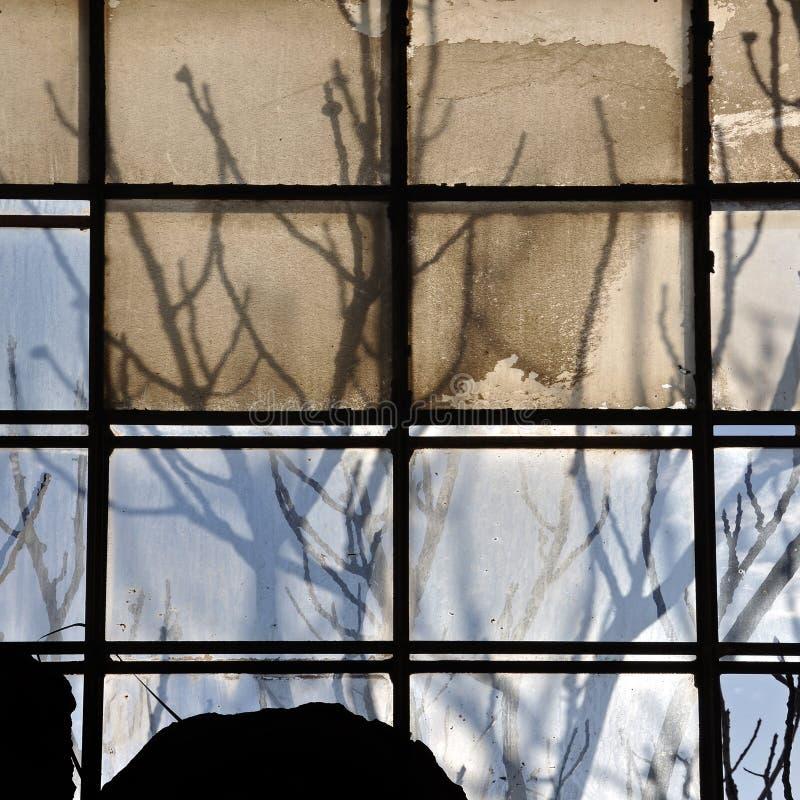Сломленные окно фабрики и ветви дерева стоковое изображение