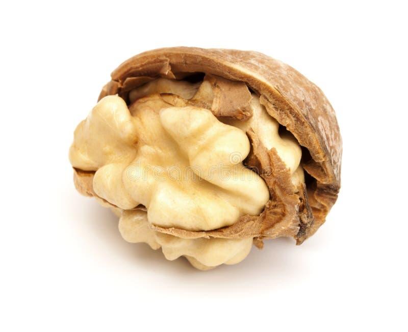 сломленный грецкий орех стоковая фотография rf