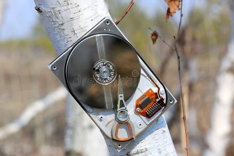 Сломленный жесткий диск компьютера на дереве березы стоковое фото rf