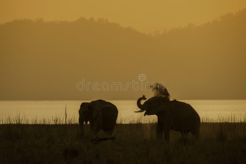 2 слона пылясь против заходящего солнца стоковые фото