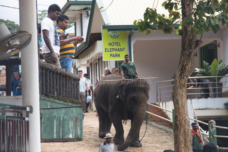 Слоны в orphenage в Шри-Ланке стоковые изображения