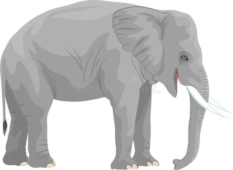 Слон вектора африканский изолированный на белизне иллюстрация штока