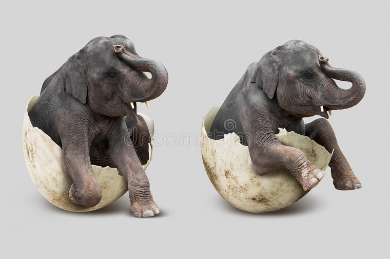 Слон в eggshell стоковая фотография rf