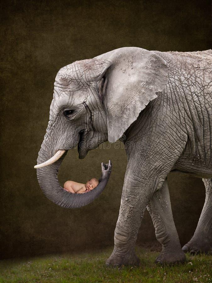 Слон держа младенца стоковые изображения