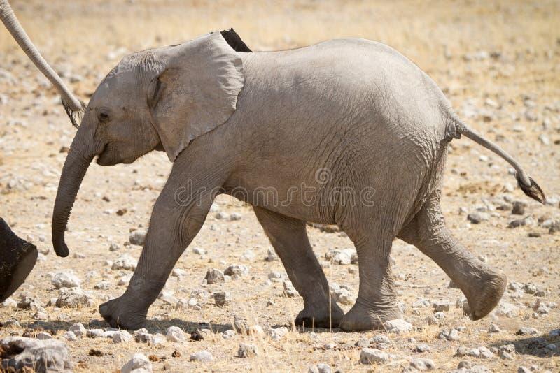 Download слон икры стоковое изображение. изображение насчитывающей ребенок - 18388729