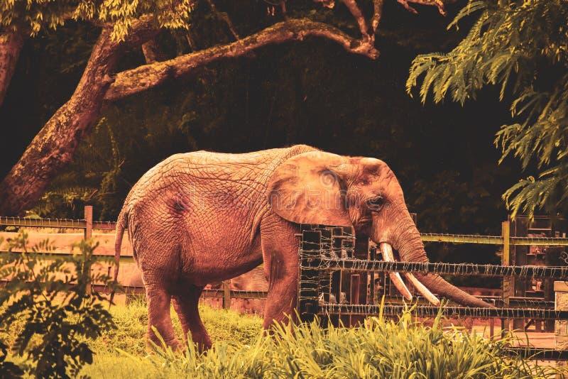 Слон и баррикада стоковое фото rf