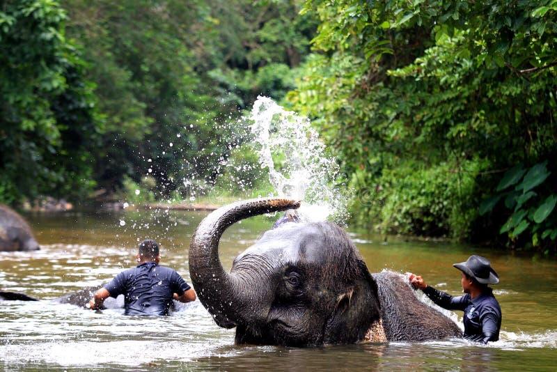 Слон купая в реке стоковая фотография