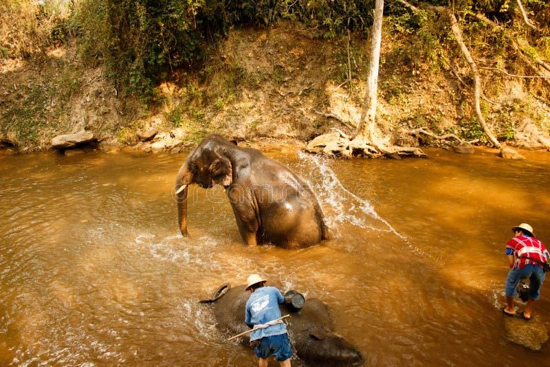 Слон купая в реке в солнечном дне - Таиланде стоковая фотография
