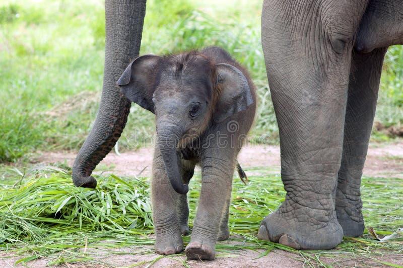 Слон младенца стоковое фото rf