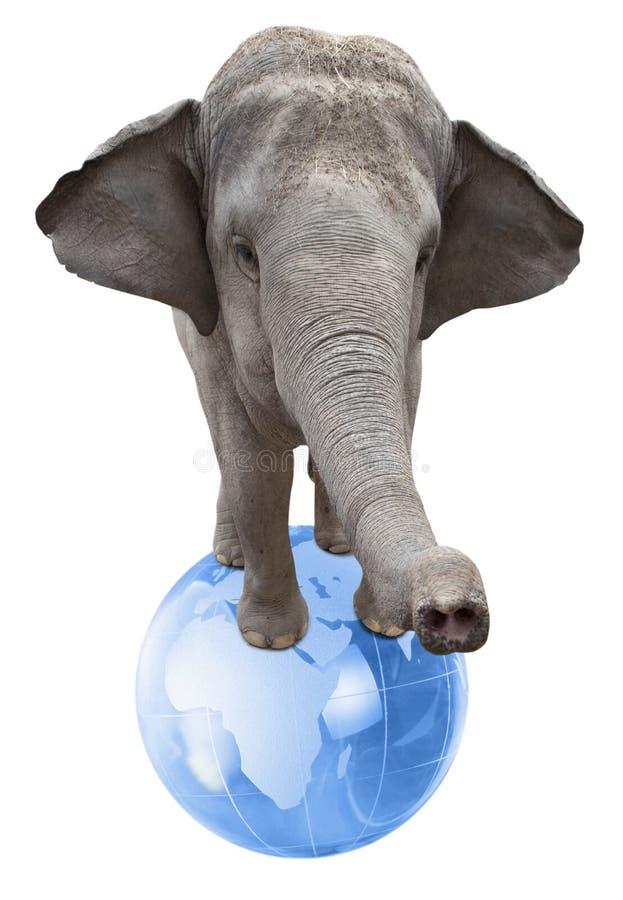 Слон цирка стоковое фото rf