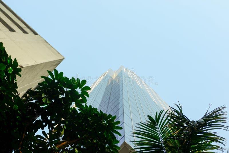 Служебные здания внешнего дизайна, высота которых высока: голубые небесные деревья стоковые фотографии rf