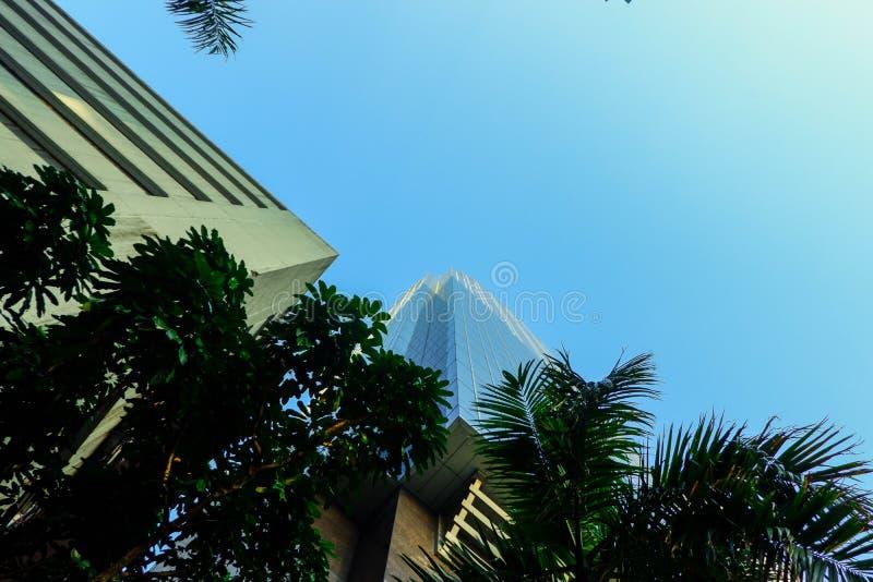 Служебные здания внешнего дизайна, высота которых высока: голубые небесные деревья стоковое изображение