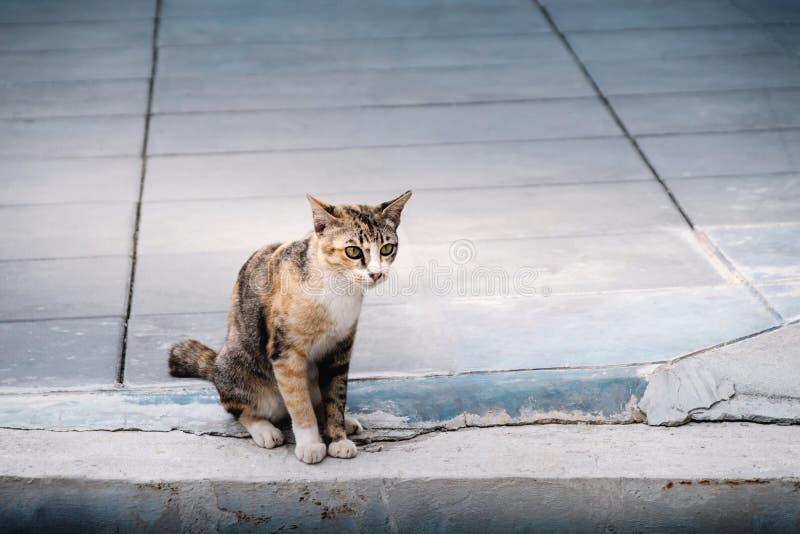 Случайный кот в городском Браун Striped кот стоковые изображения