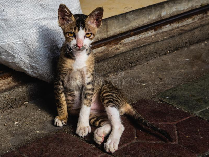 Случайный кот на улицах смотрит прямо в камере стоковые изображения rf