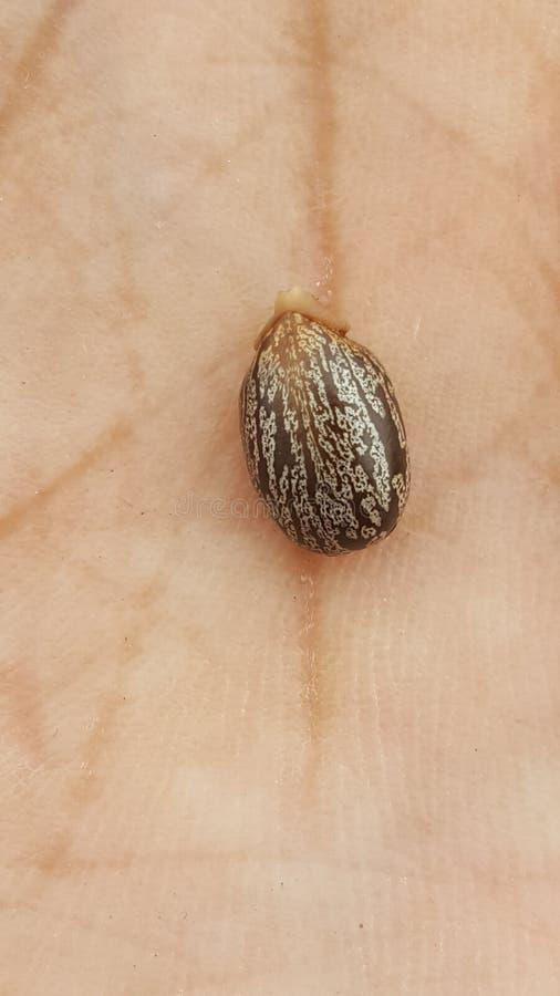 Смажьте в семени, ничего точном о ем стоковая фотография