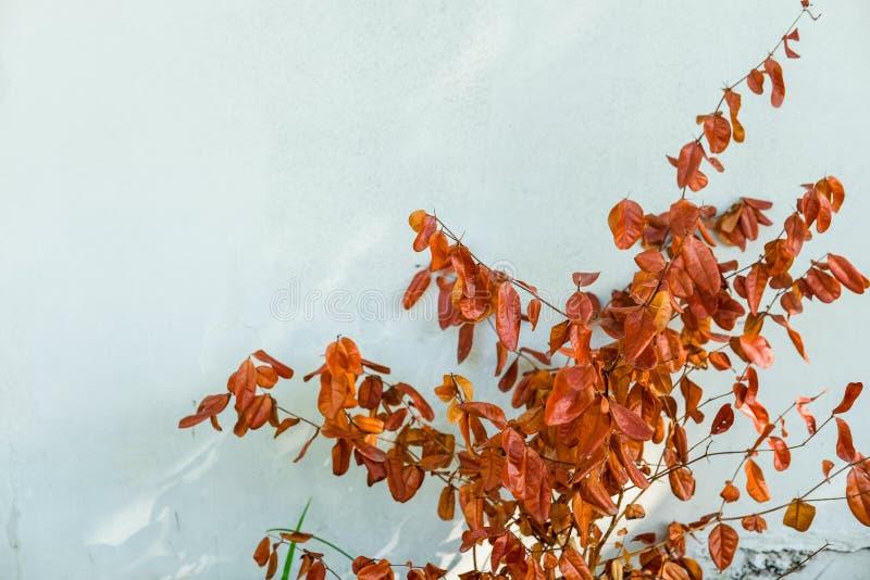 Смертельно листья коричневого цвета на стене цемента стоковая фотография rf