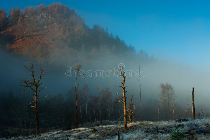 Смертельно forrest под горой, обезлесением стоковые фото