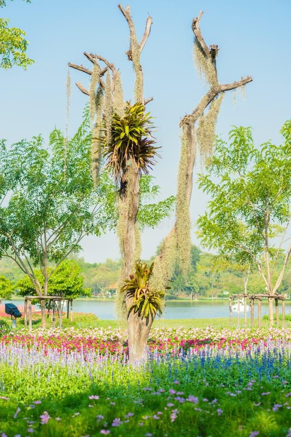 Смертная казнь через повешение испанского мха на дереве стоковое фото rf